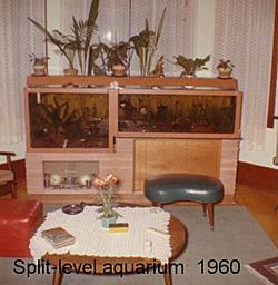 A szerző akváriumai 1960-ban